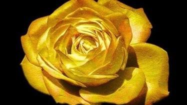 "XXXV Festivalul bulgar de film ""Trandafirul de Aur"""
