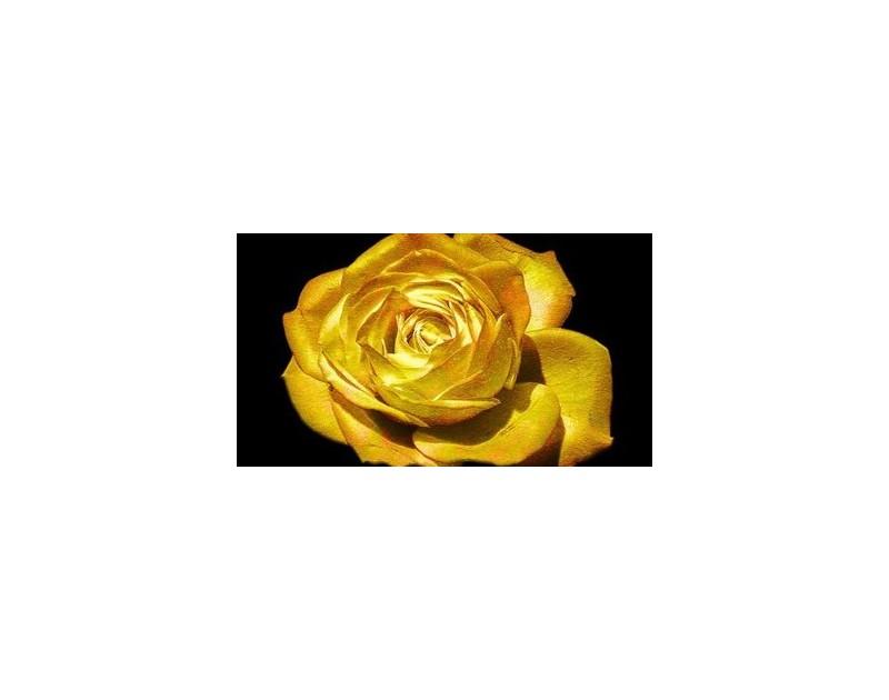 37-ми Фестивал на българския игрален филм Златна роза