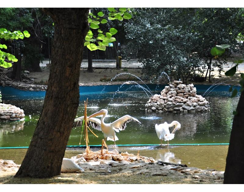 Зоопарк Варна - среща с природата