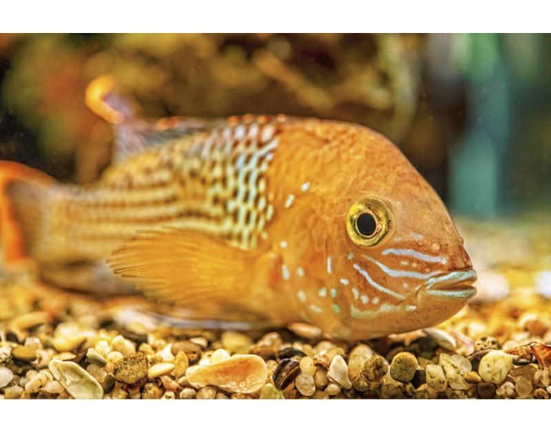 Aquarium Varna