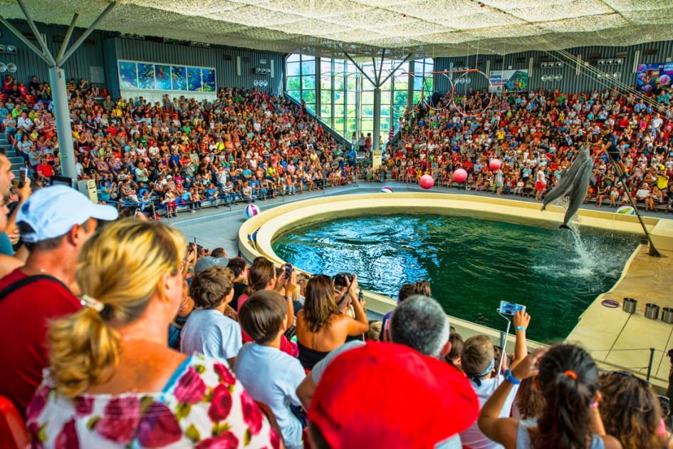 Dolphinarium Visit Varna Official Varna City Guide